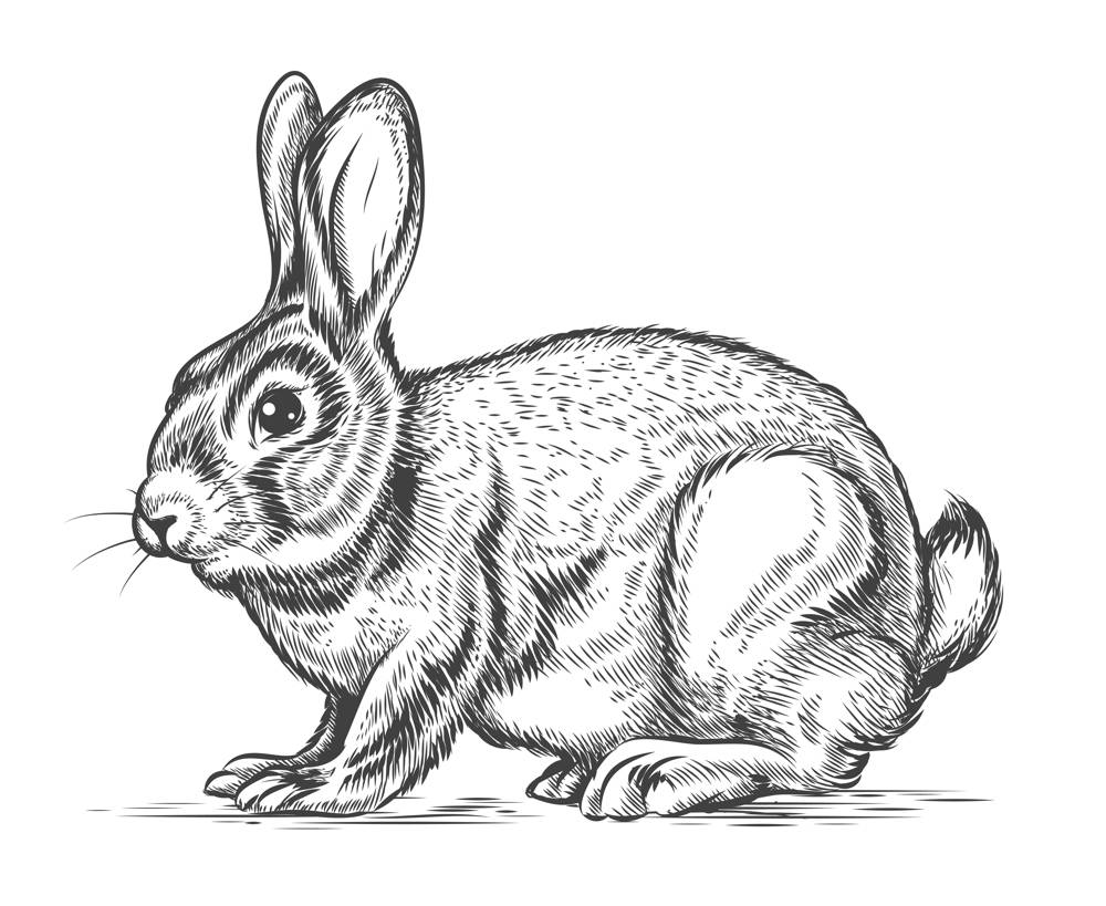 Najlepsza klatka dla królika domowego